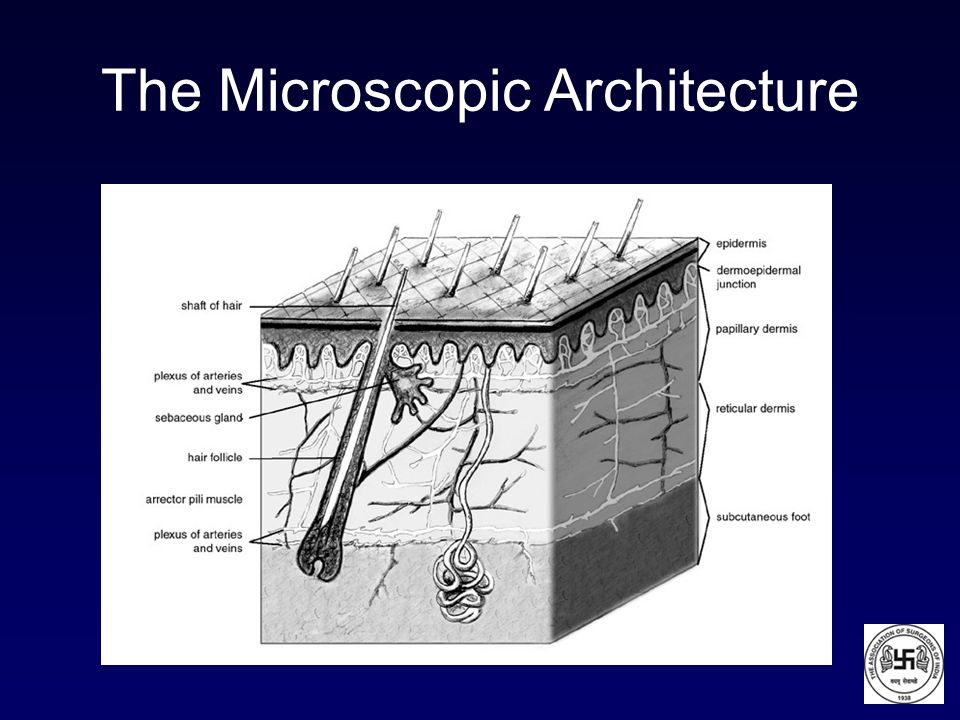 The Microscopic Architecture