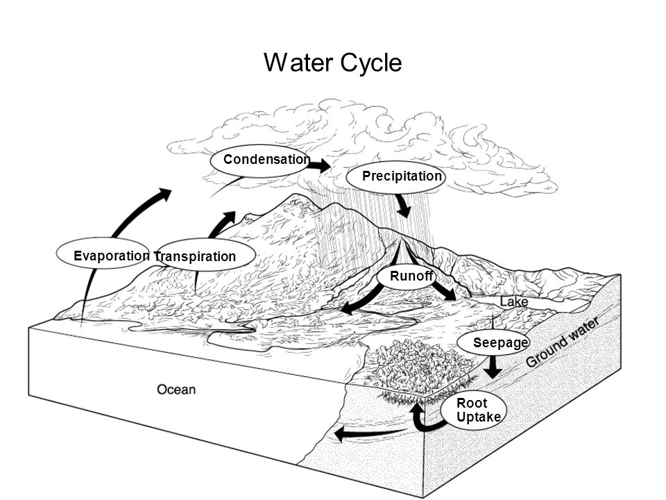 Water Cycle The Water Cycle Section 3-3 Condensation Precipitation