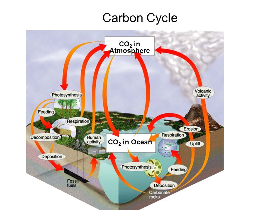 Carbon Cycle Figure 3-13 The Carbon Cycle CO2 in Atmosphere