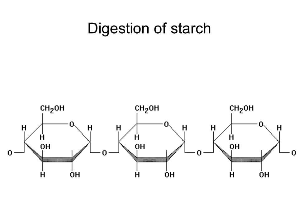 Digestion of starch Starch is a much larger molecule. Digestion breaks the bonds between the units.