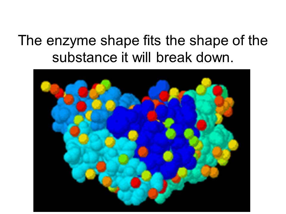 The enzyme shape fits the shape of the substance it will break down.