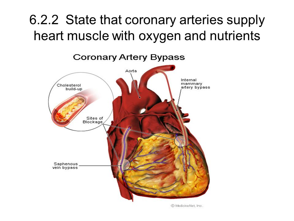 6.2.2 State that coronary arteries supply heart muscle with oxygen and nutrients