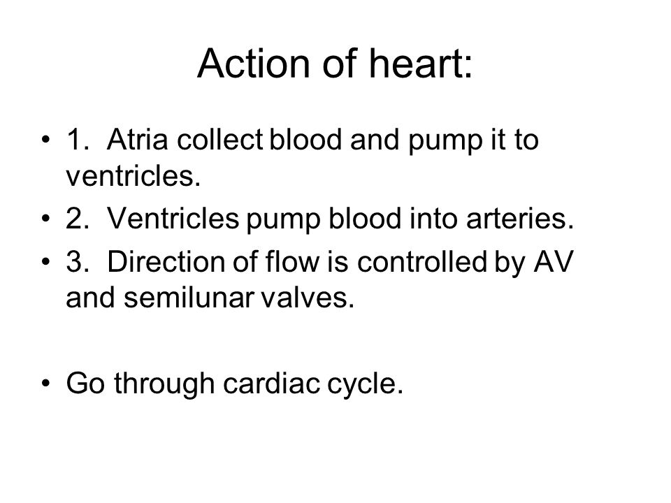 Action of heart: 1. Atria collect blood and pump it to ventricles.