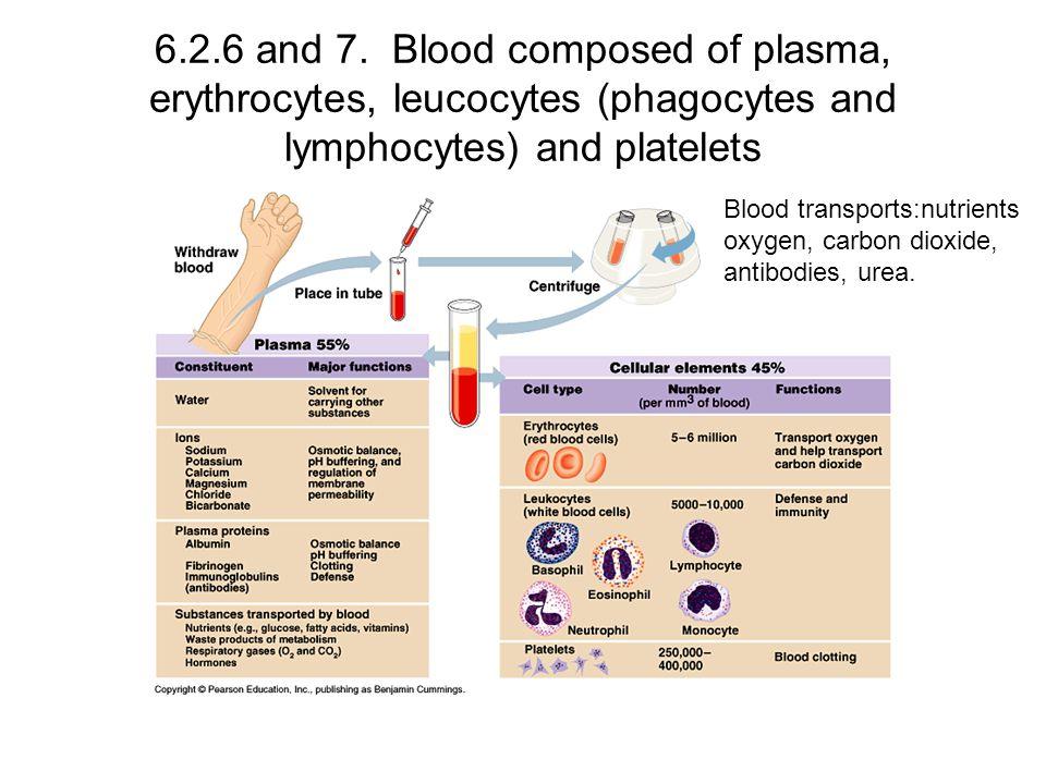6.2.6 and 7. Blood composed of plasma, erythrocytes, leucocytes (phagocytes and lymphocytes) and platelets
