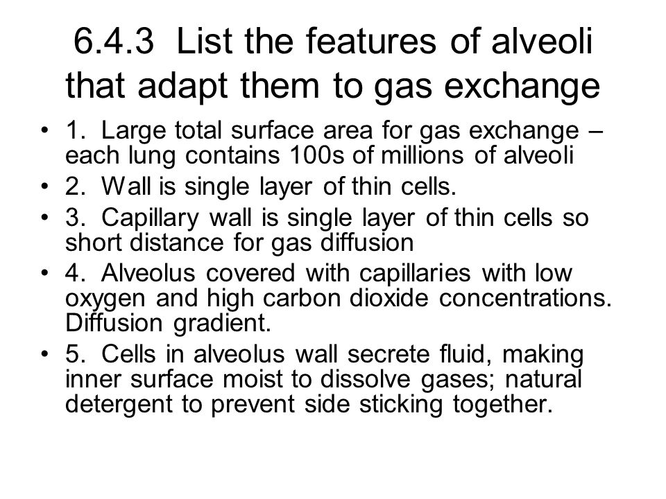 6.4.3 List the features of alveoli that adapt them to gas exchange