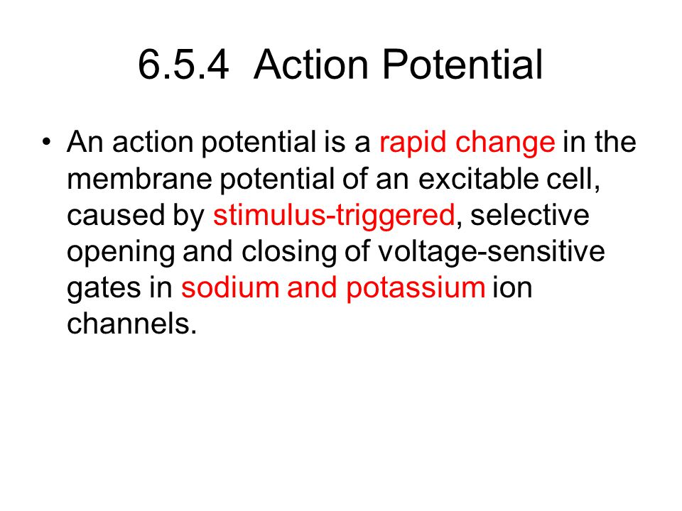6.5.4 Action Potential
