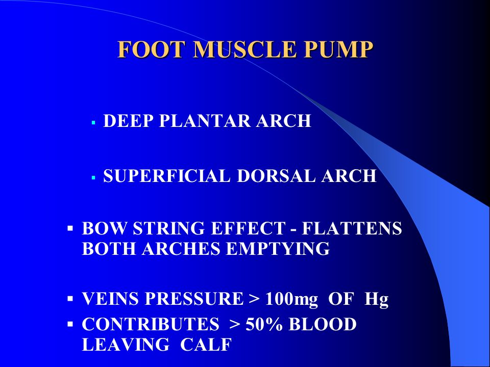 FOOT MUSCLE PUMP DEEP PLANTAR ARCH SUPERFICIAL DORSAL ARCH