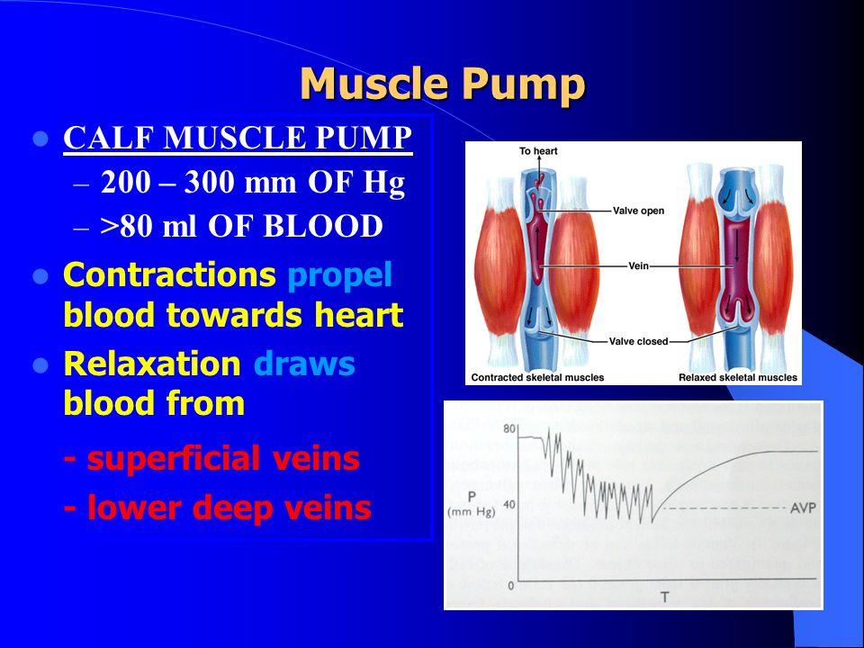 Muscle Pump - superficial veins CALF MUSCLE PUMP 200 – 300 mm OF Hg