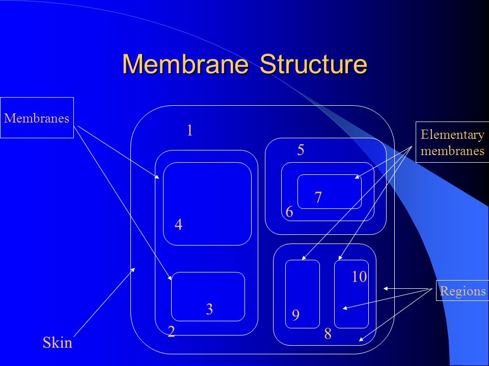 Membrane Structure 1 5 7 6 4 10 3 9 Skin 2 8 Membranes Elementary