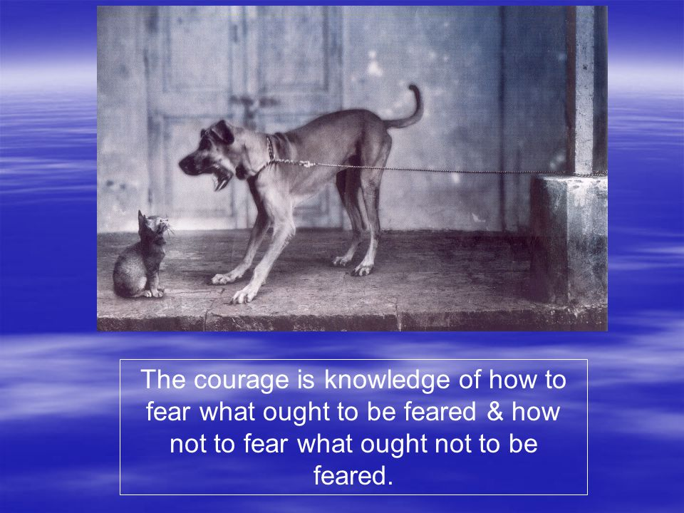 The courage is knowledge of how to fear what ought to be feared & how not to fear what ought not to be feared.