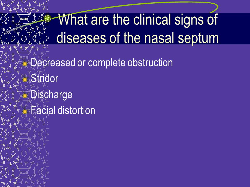 What are the clinical signs of diseases of the nasal septum