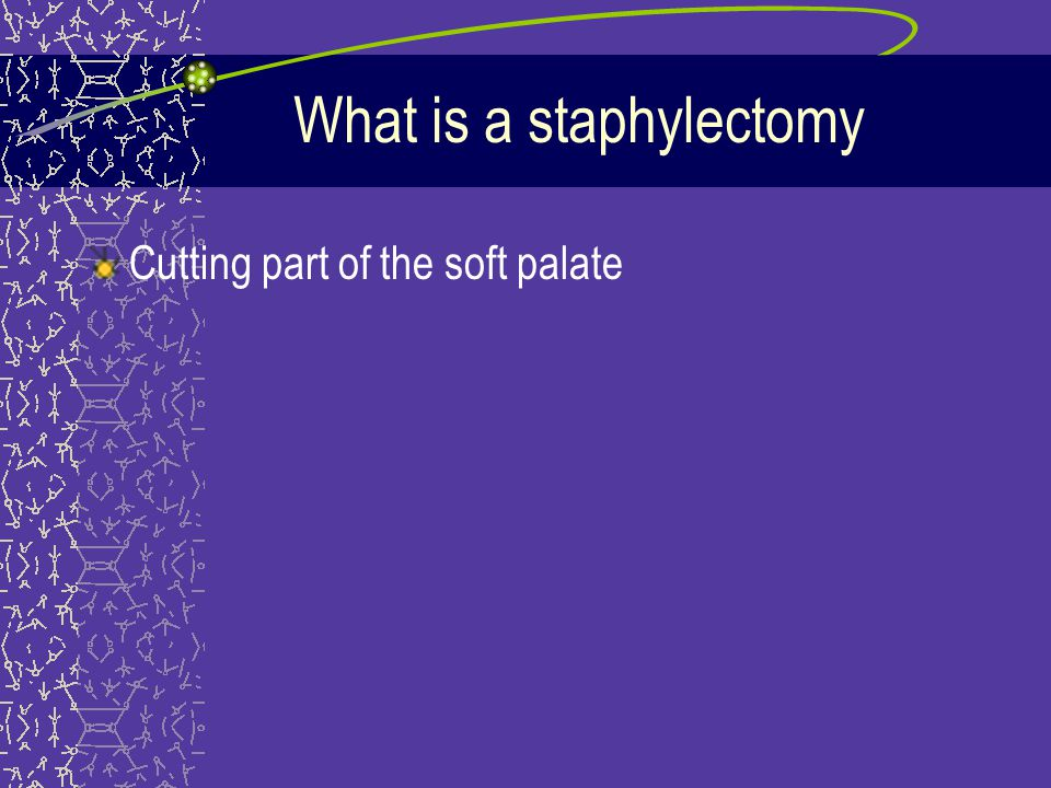 What is a staphylectomy