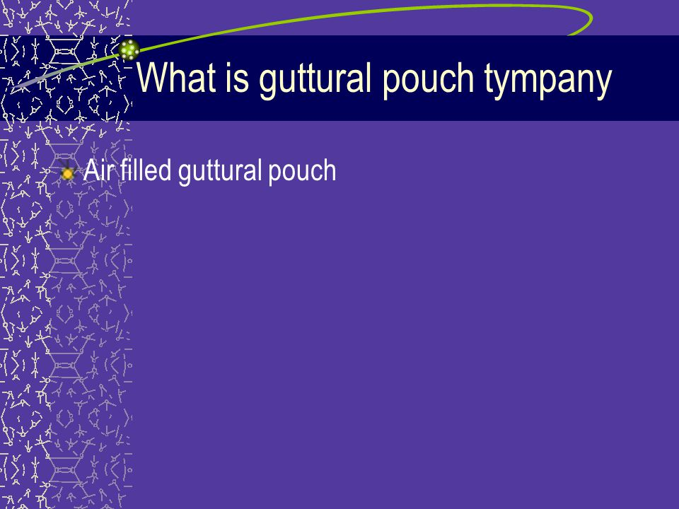 What is guttural pouch tympany
