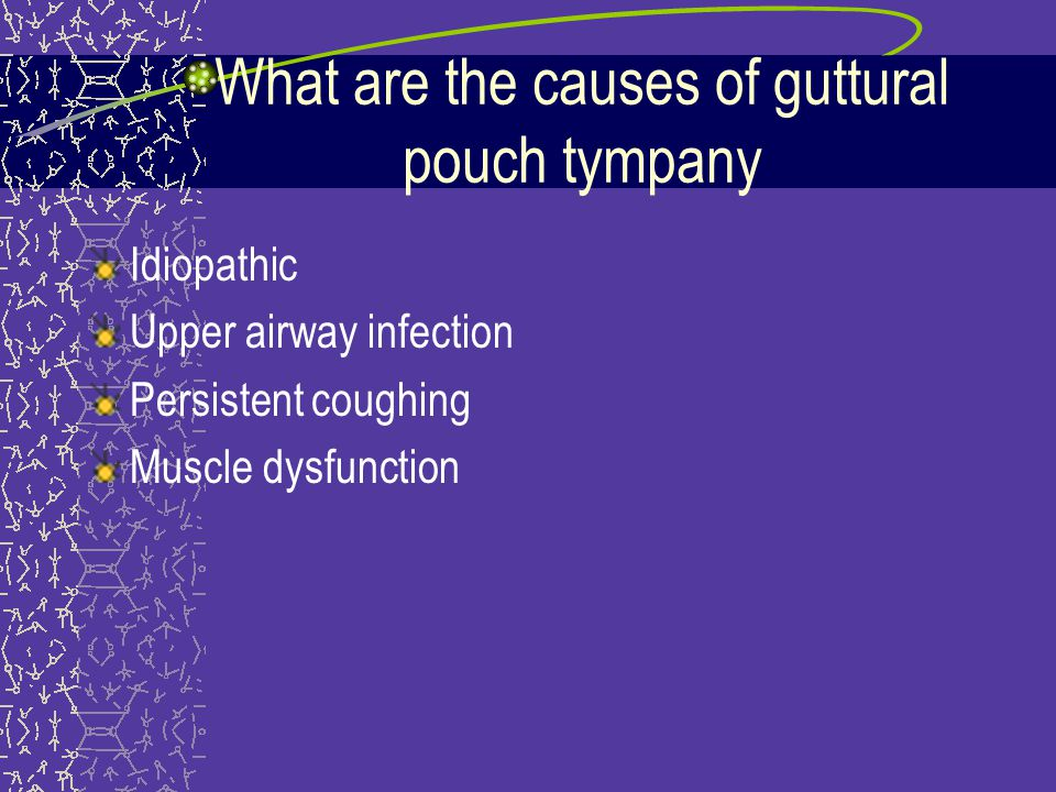 What are the causes of guttural pouch tympany