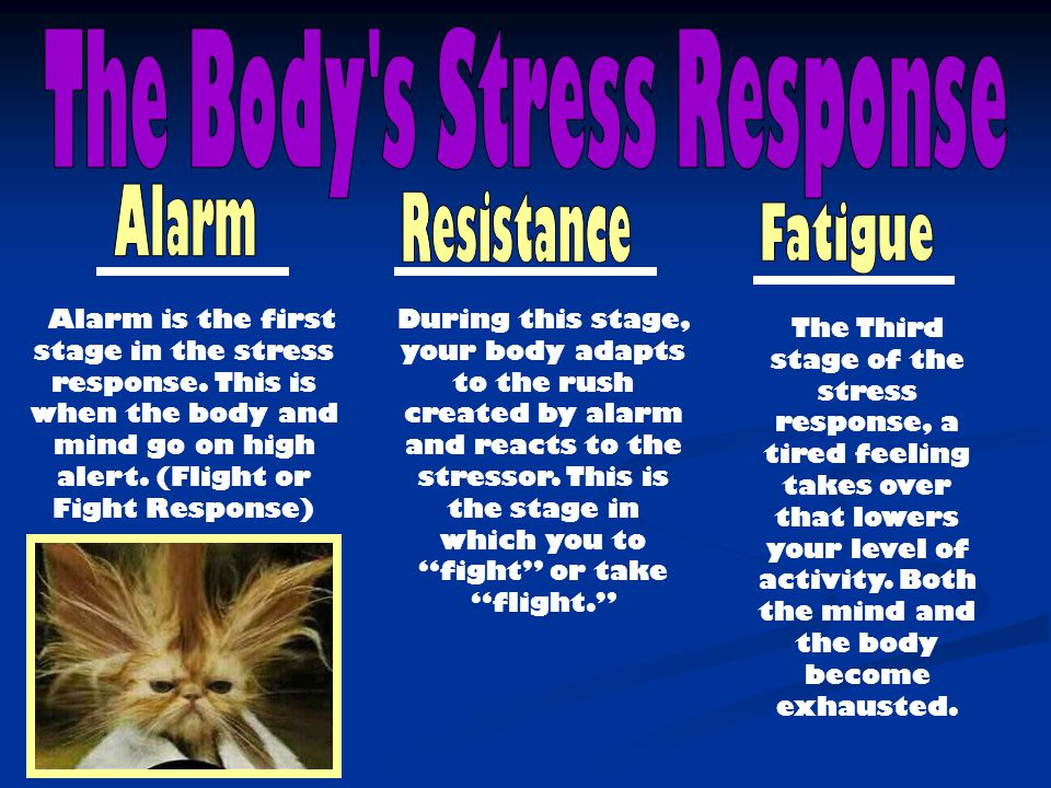 The Body s Stress Response