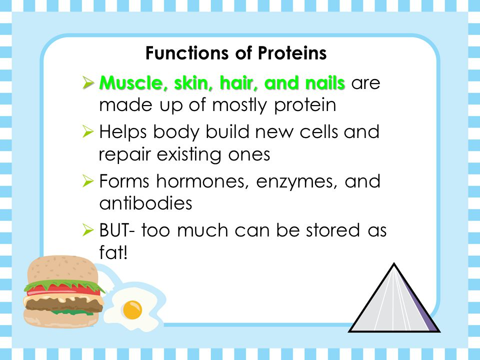 Functions of Proteins Muscle, skin, hair, and nails are made up of mostly protein. Helps body build new cells and repair existing ones.
