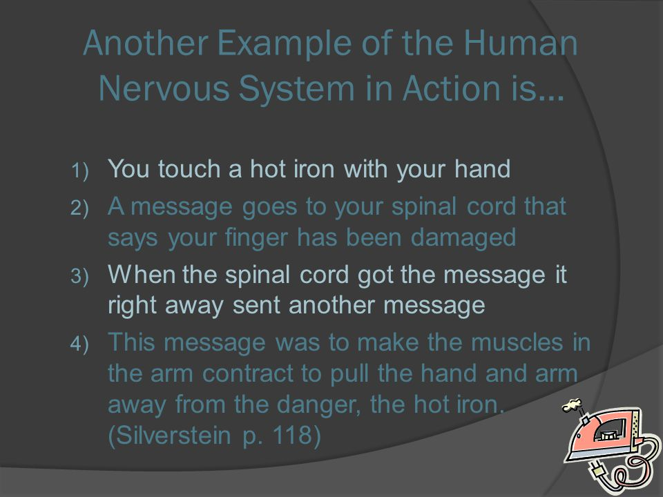 Another Example of the Human Nervous System in Action is…