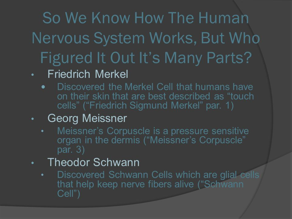 So We Know How The Human Nervous System Works, But Who Figured It Out It's Many Parts