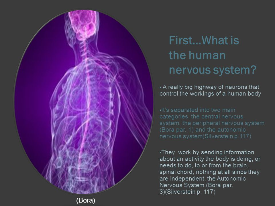 First…What is the human nervous system