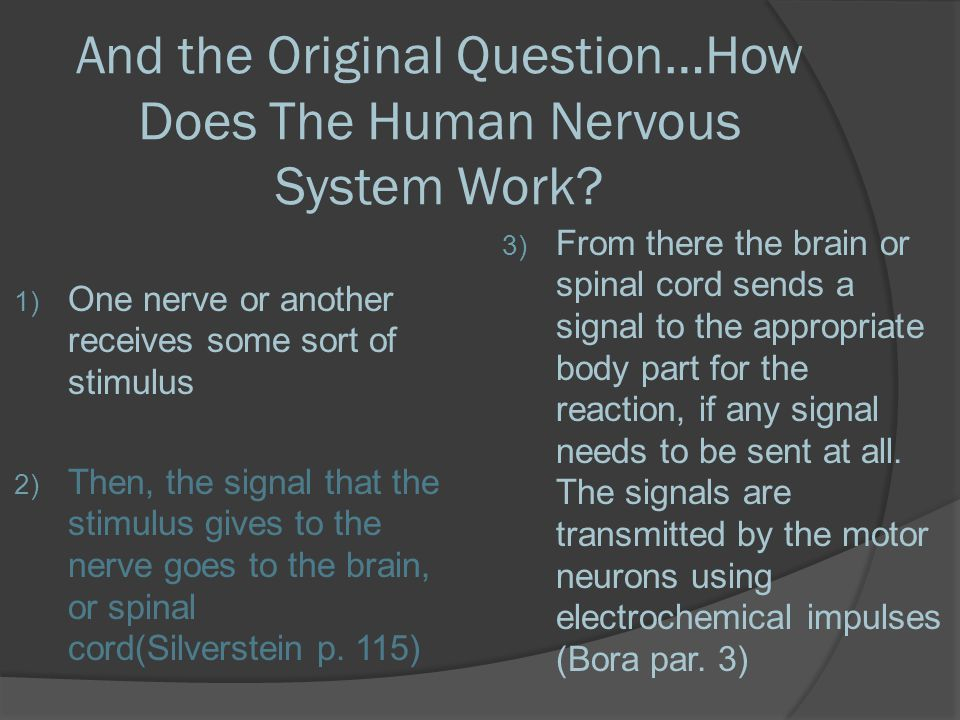 And the Original Question…How Does The Human Nervous System Work