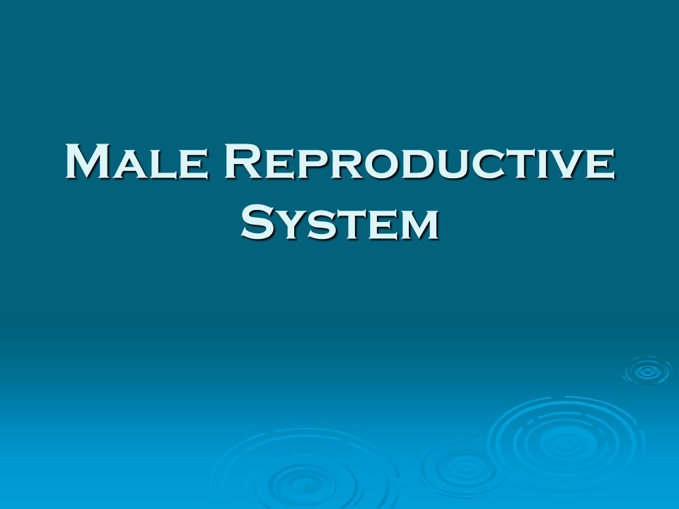 essay reproductive system