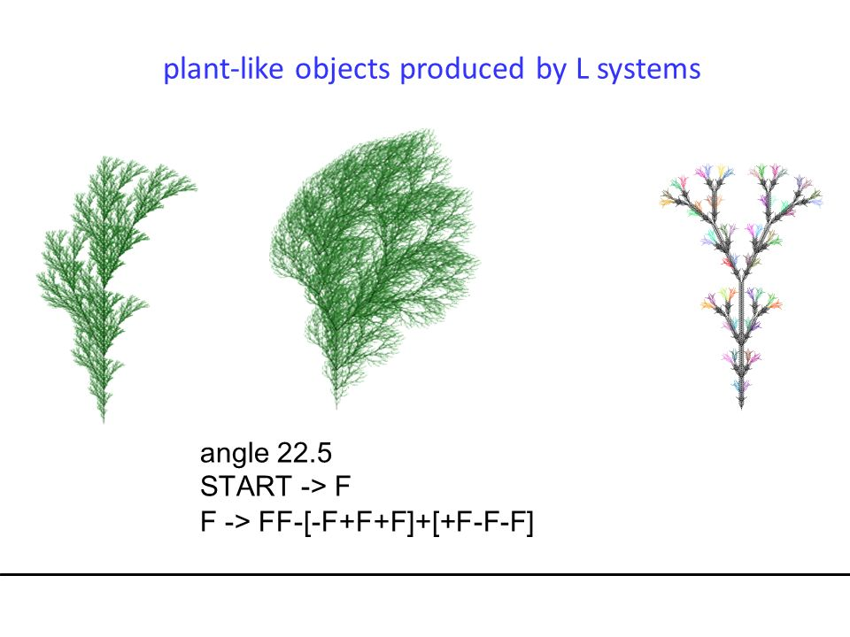 plant-like objects produced by L systems