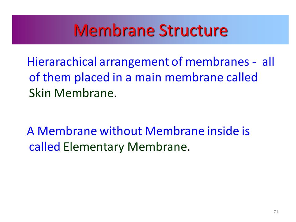 Membrane Structure Hierarachical arrangement of membranes - all of them placed in a main membrane called Skin Membrane.