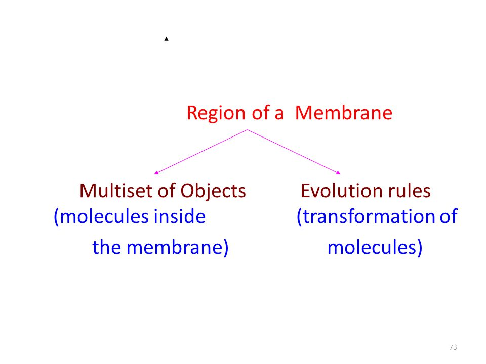 Region of a Membrane Multiset of Objects Evolution rules (molecules inside (transformation of the membrane) molecules)