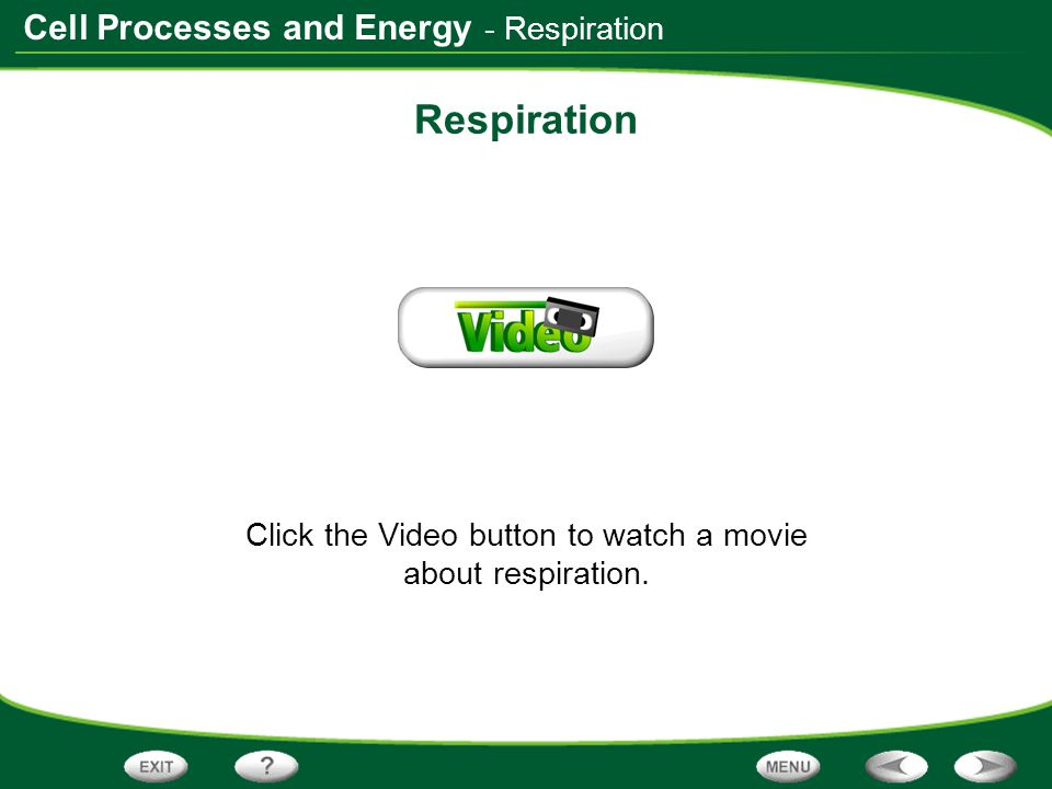 Click the Video button to watch a movie about respiration.