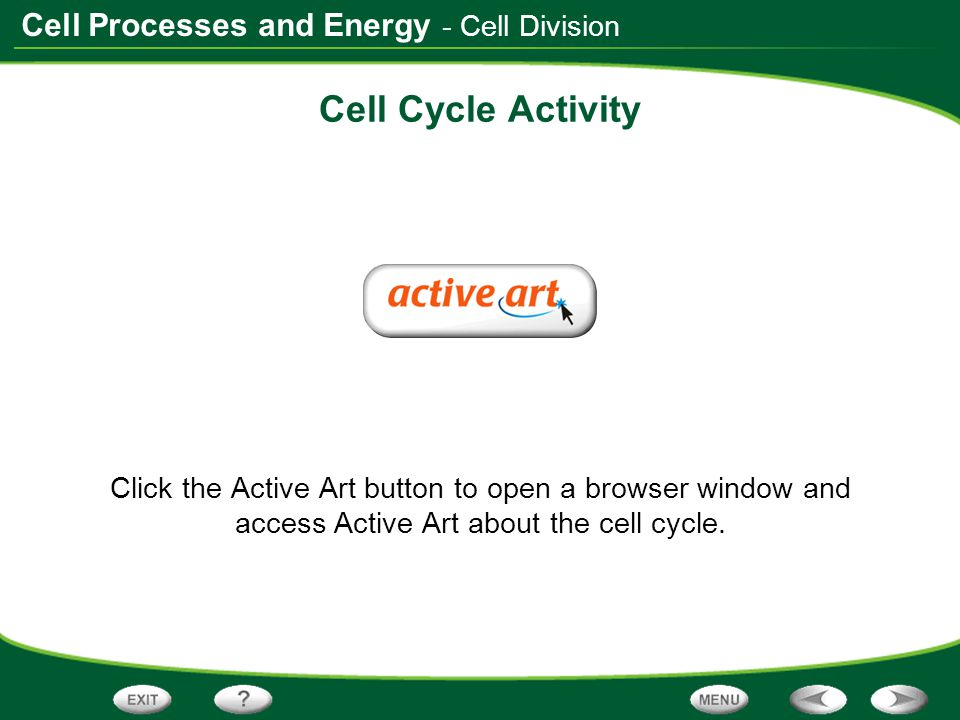 Cell Cycle Activity - Cell Division