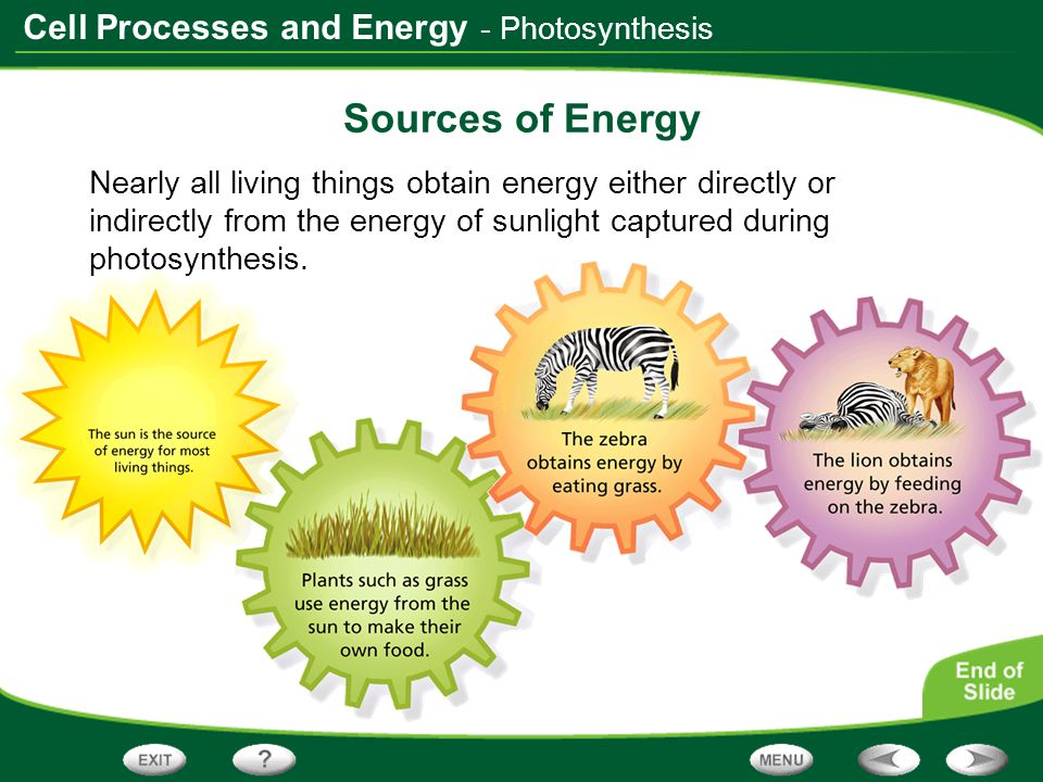 Sources of Energy - Photosynthesis