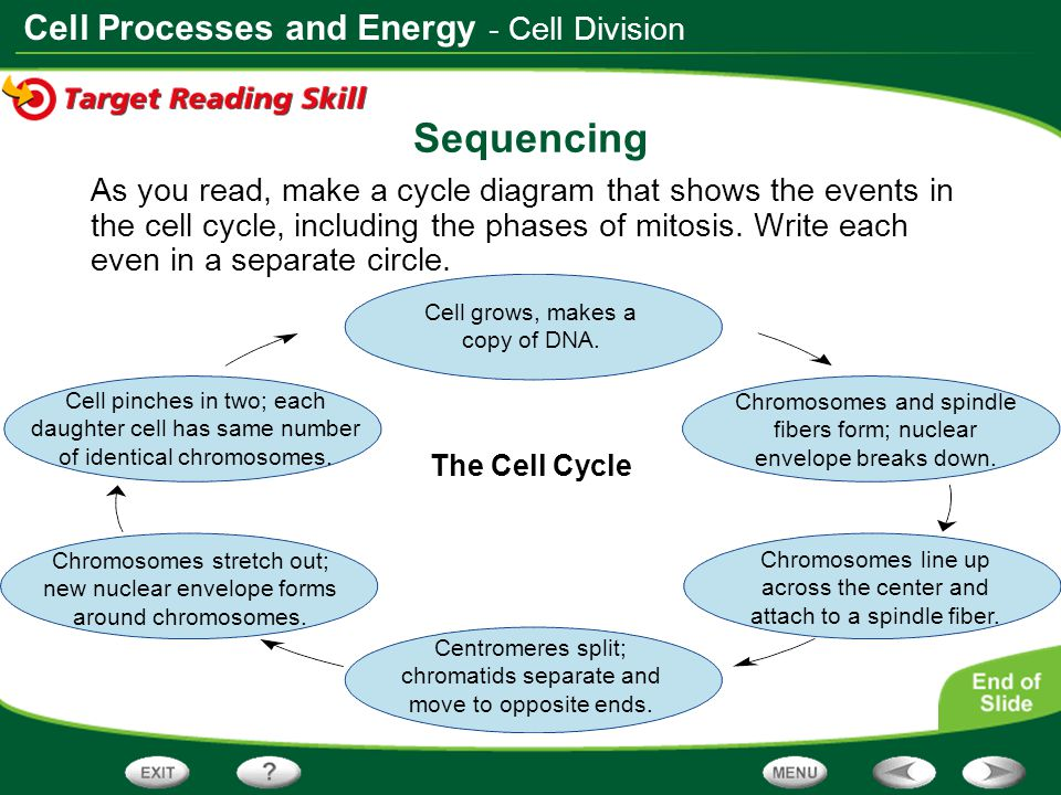 Sequencing - Cell Division