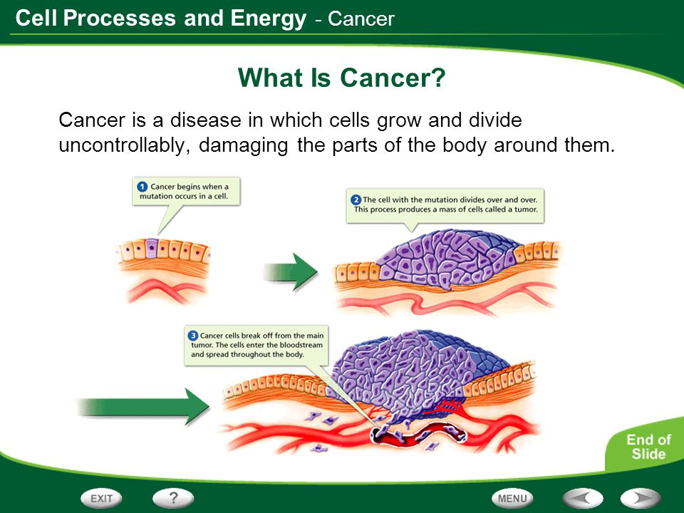 - Cancer What Is Cancer.
