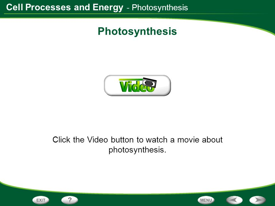 Click the Video button to watch a movie about photosynthesis.