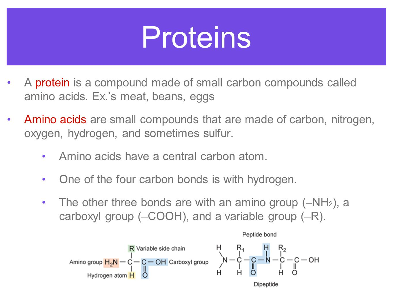 Proteins A protein is a compound made of small carbon compounds called amino acids. Ex.'s meat, beans, eggs.