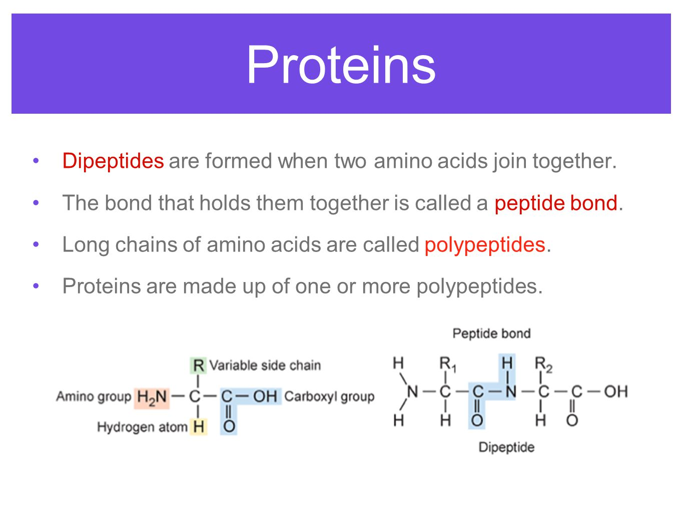 Proteins Dipeptides are formed when two amino acids join together.