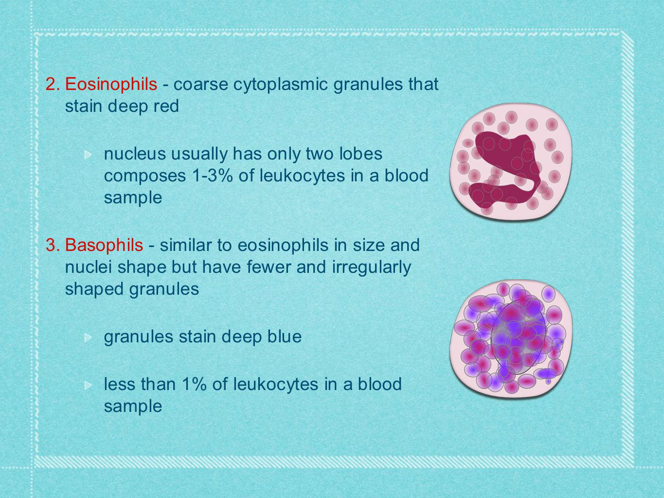 Eosinophils - coarse cytoplasmic granules that stain deep red