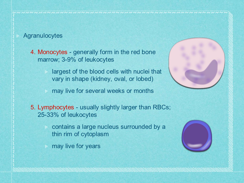 Agranulocytes Monocytes - generally form in the red bone marrow; 3-9% of leukocytes.