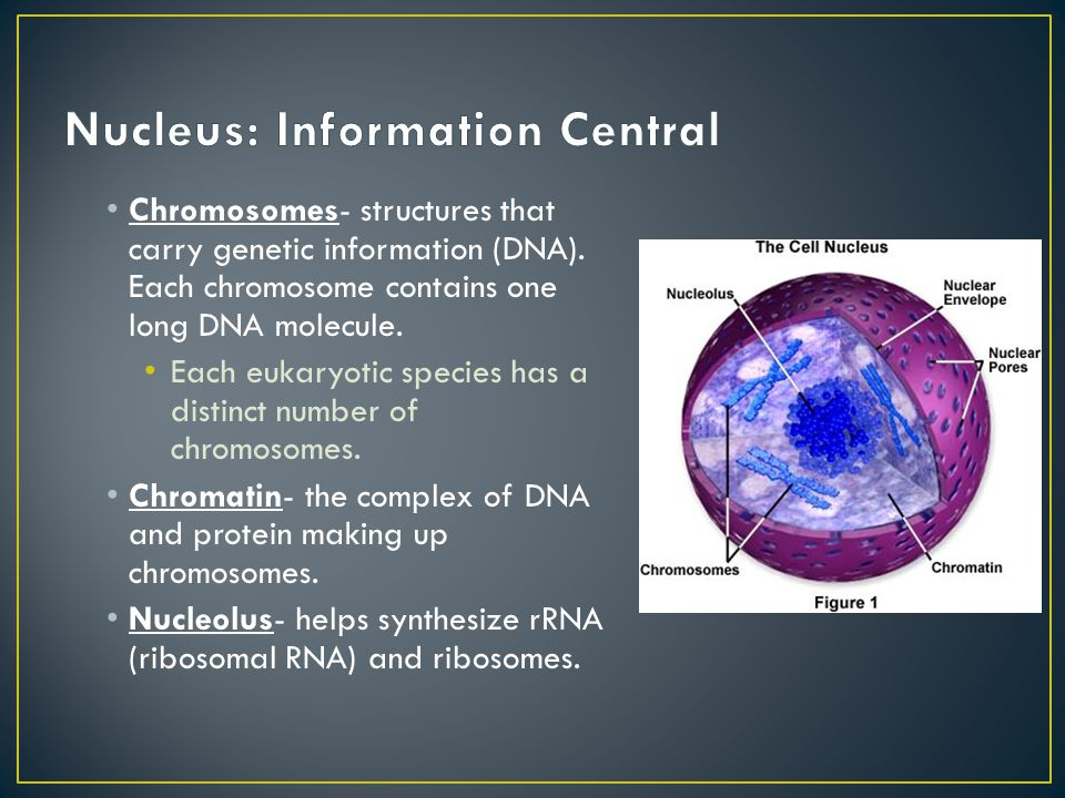 Nucleus: Information Central