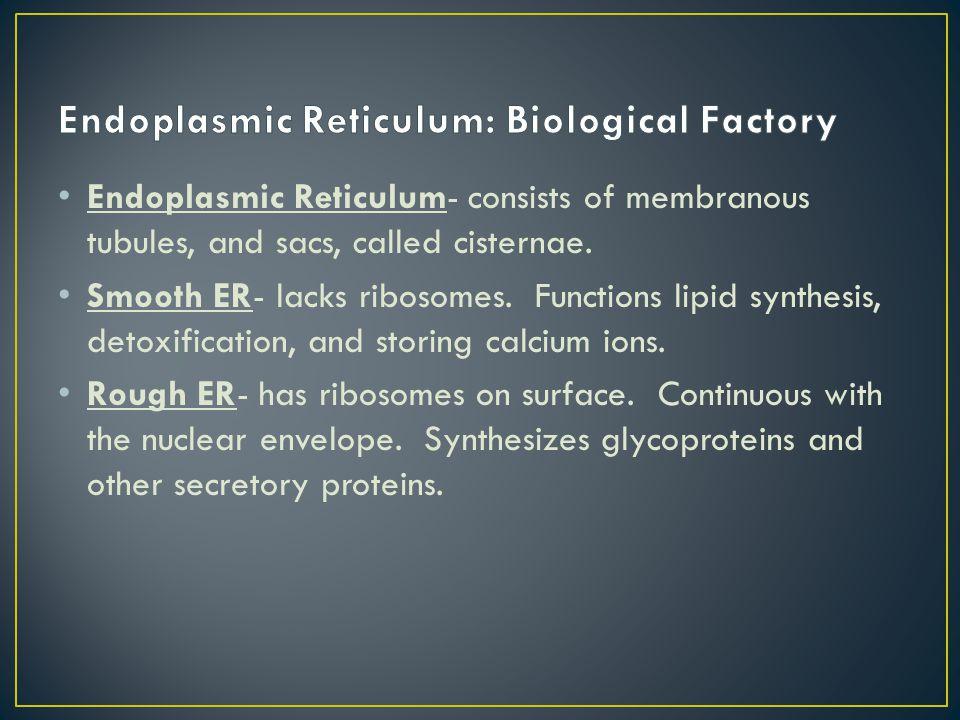 Endoplasmic Reticulum: Biological Factory