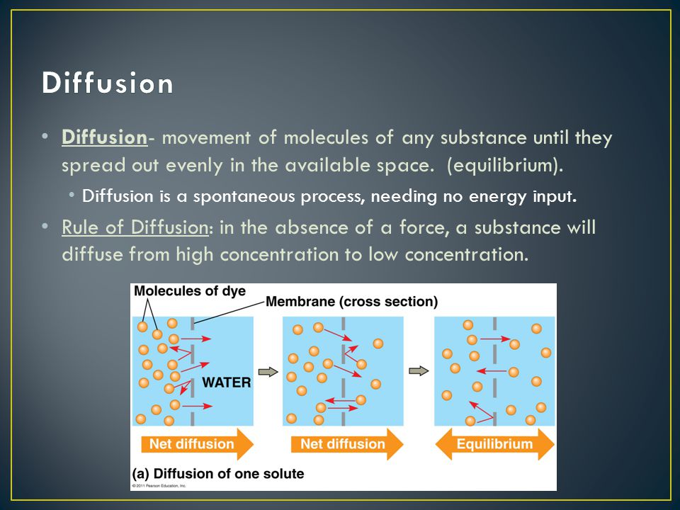 Diffusion Diffusion- movement of molecules of any substance until they spread out evenly in the available space. (equilibrium).