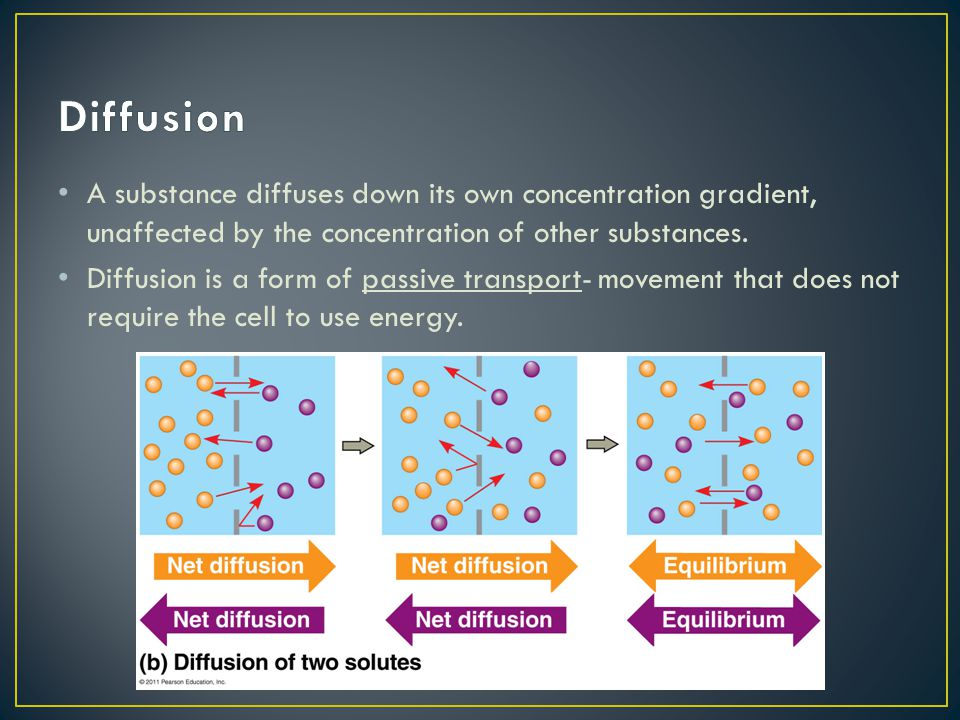 Diffusion A substance diffuses down its own concentration gradient, unaffected by the concentration of other substances.