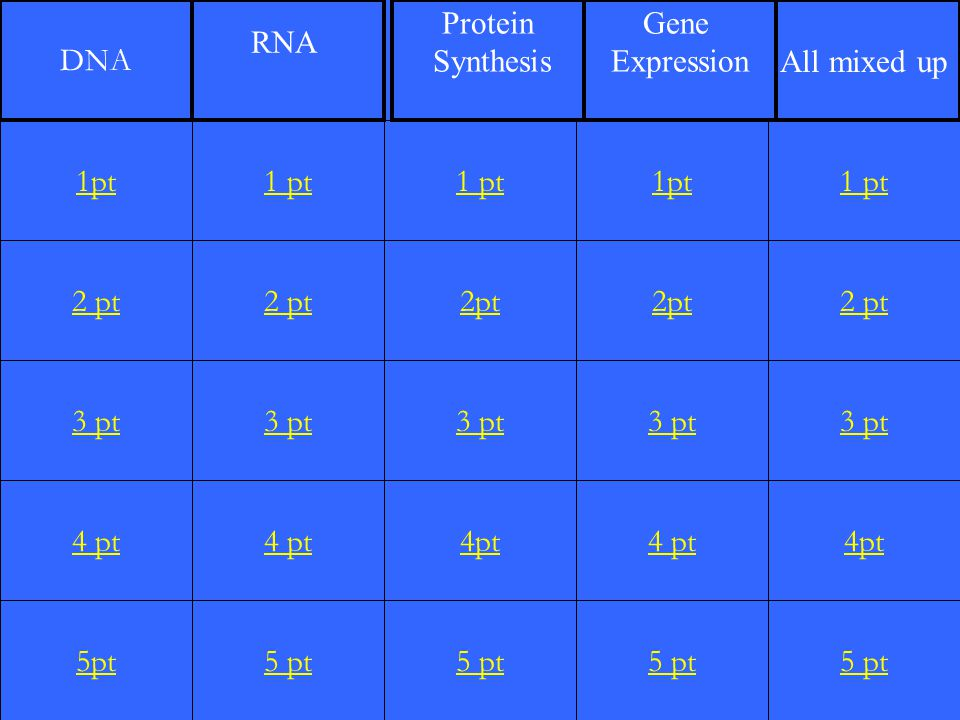 DNA RNA. Protein. Synthesis. Gene. Expression. All mixed up. 1pt. 1 pt. 1 pt. 1pt. 1 pt. 2 pt.