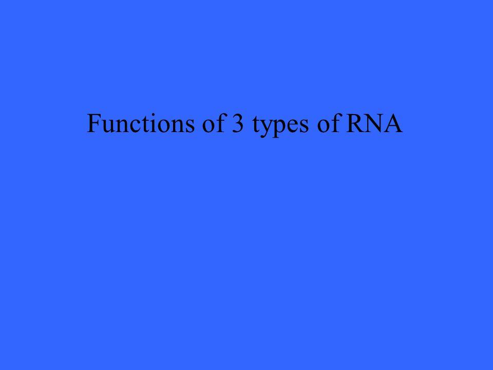 Functions of 3 types of RNA