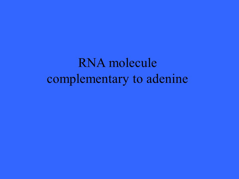 RNA molecule complementary to adenine