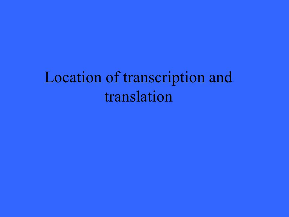 Location of transcription and translation