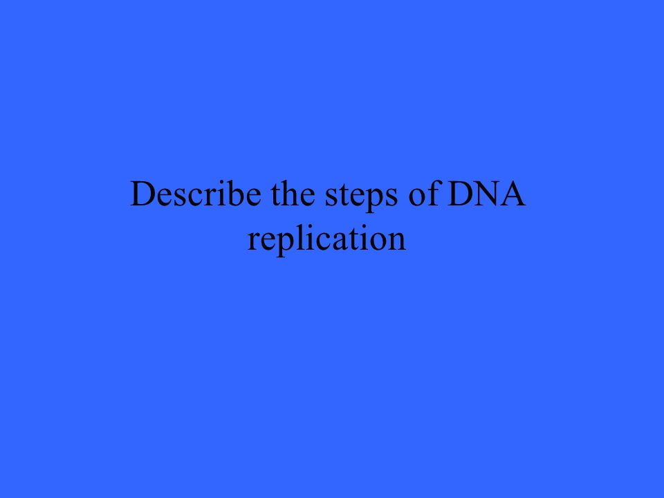 Describe the steps of DNA replication