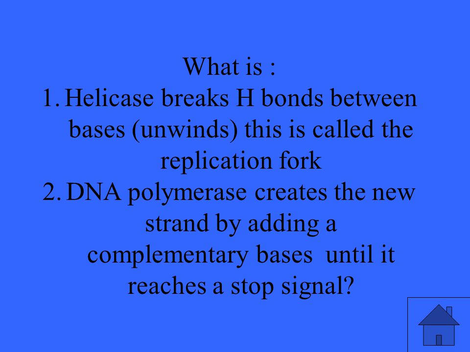 What is : Helicase breaks H bonds between bases (unwinds) this is called the replication fork.