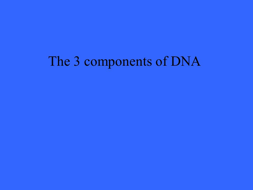 The 3 components of DNA