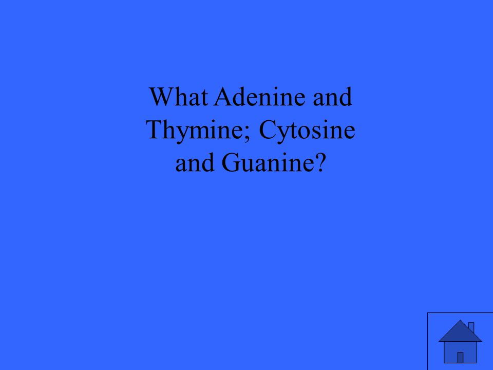 What Adenine and Thymine; Cytosine and Guanine